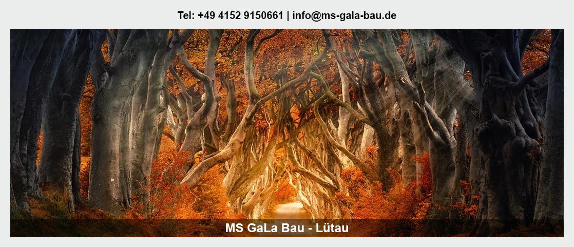 Garten- und Landschaftsbau Alt Mölln - Martin Schwerdtfeger: Baumpflege, Seilklettertechnik